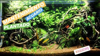 Acuario Pequeño 30 Litros: Mantenimiento Semanal Mini Acuario  || AquaTips