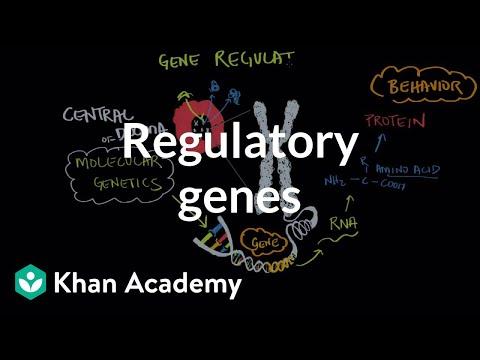 Regulatory genes | Behavior | MCAT | Khan Academy