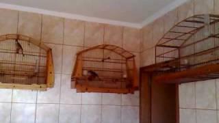Trinca ferro baderna em casa