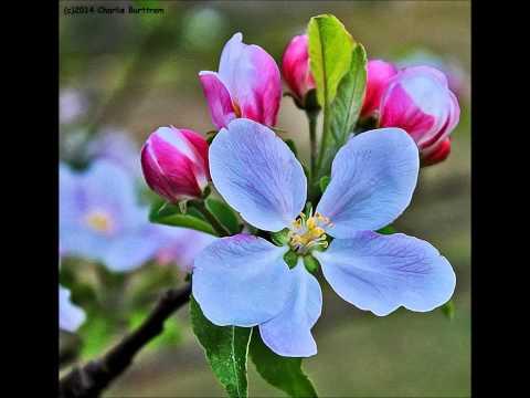 """Lucinda Williams  """" Am I Too Blue"""""""