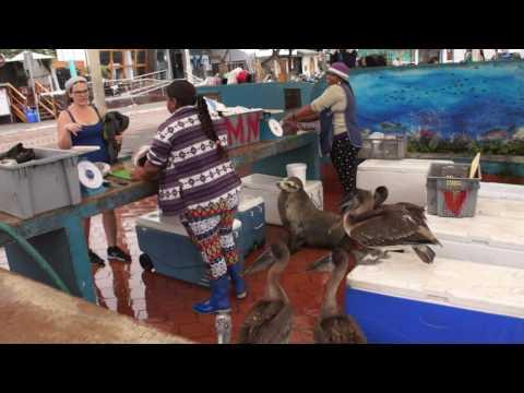 Fish market in Puerto Ayora on Santa Cruz island Galapagos