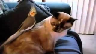 Истории из жизни кошек