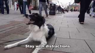 Jess - Border Collie - Residential Dog Training / Dog Boot Camp With Adolescent Dogs Uk