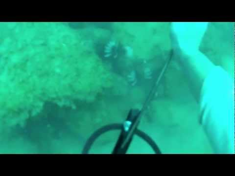 spearfishing OFFshore