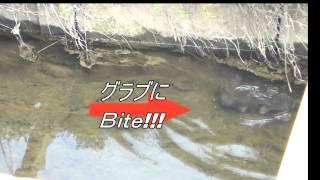 ラバージグ:見えナマズ釣り動画 thumbnail