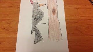 Ağaçkakan Nasıl Çizilir / How to draw a woodpecker