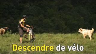 Chiens de protection des troupeaux: Conseils pour les randonneurs et les cyclistes
