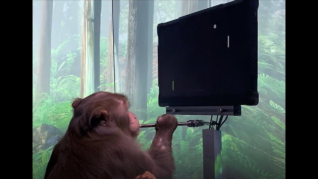 Monkey MindPong