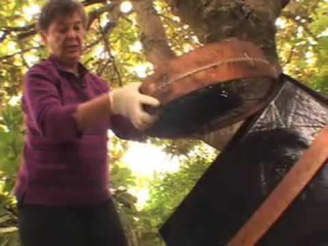 Black gold: high rent worm composting