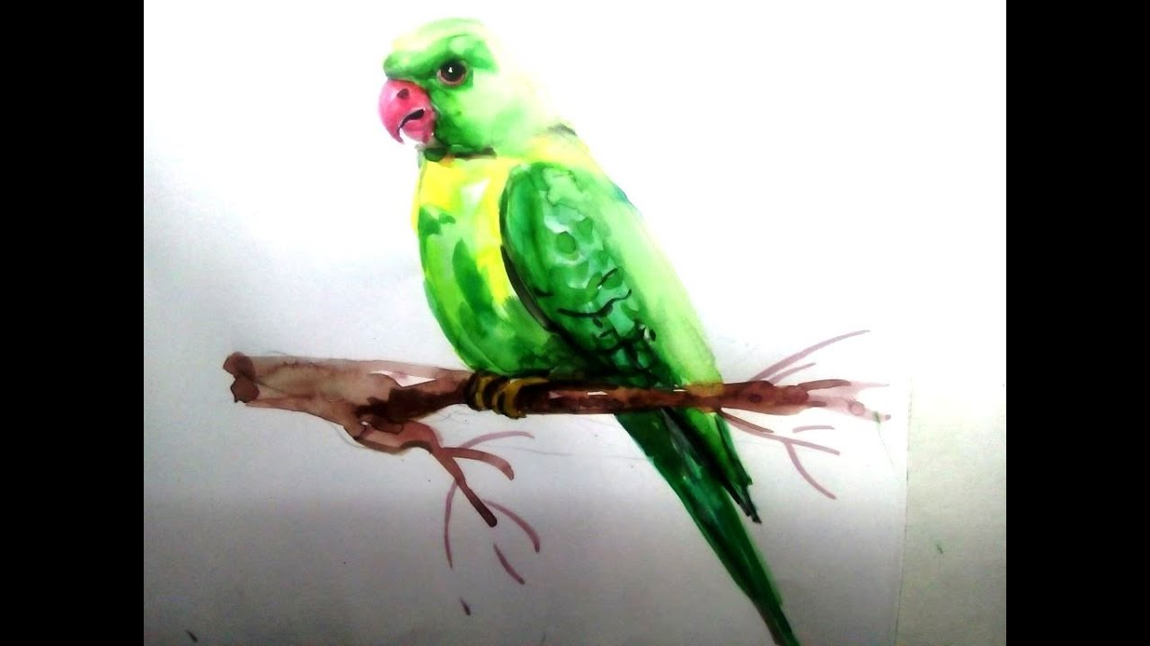 Parrot Draw In Water Colour Art Youtube