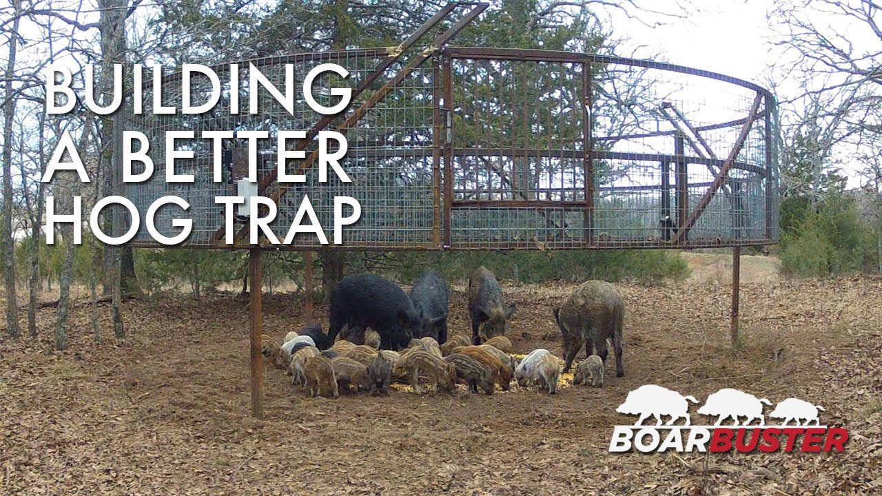 Introducing BoarBuster: A Better Hog Trapping System | Feral