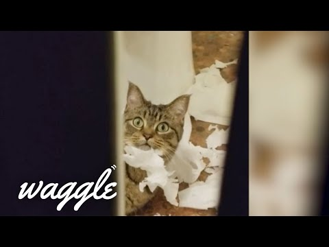 Terrible Houseguests | Funny Pet Videos
