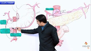 Celiac artery --------------------- Celiac artery, also known as th...