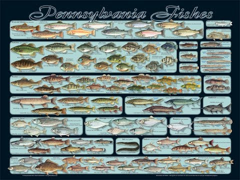 Pennsylvania Fish Species