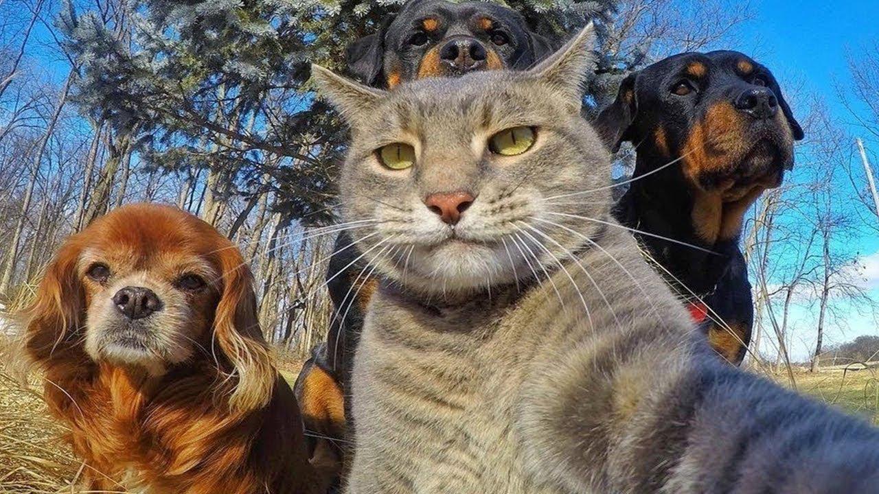 Прикольные, юмор смешные картинки животных