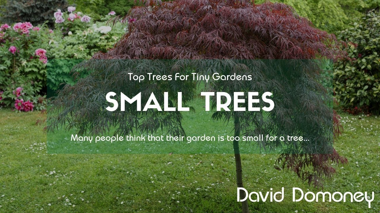 Top 10 Small Trees For Tiny Gardens Youtube