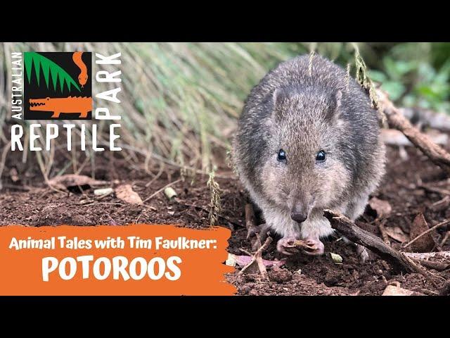 ANIMAL TALES WITH TIM FAULKNER | EPISODE 20 | POTAROO!