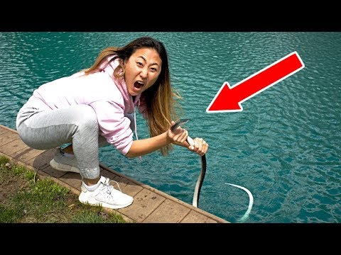 SNAKE IN POND!! (CAUGHT IT)