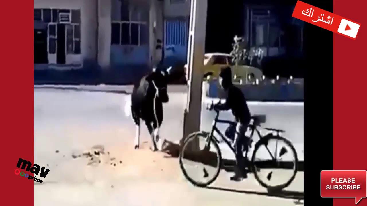 شاهد افضل فيديو مضحك  في العالم وانا اتحداك ان لا تضحك