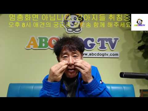 ABC DOG TV 예방접종후 목에 혹 질문