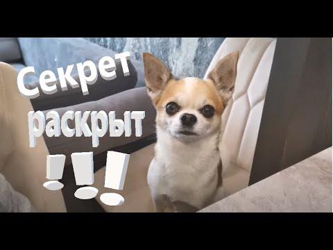 Вопрос: Может ли собака распознать хозяина на экране телевизора?