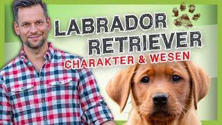 RASSEPORTRAIT: Labrador Retriever [Rasse, Linien, und Wesen]