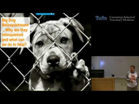 Animal Matters Seminar: Changing Perspectives on Rehoming and Retention of Dogs and Cats