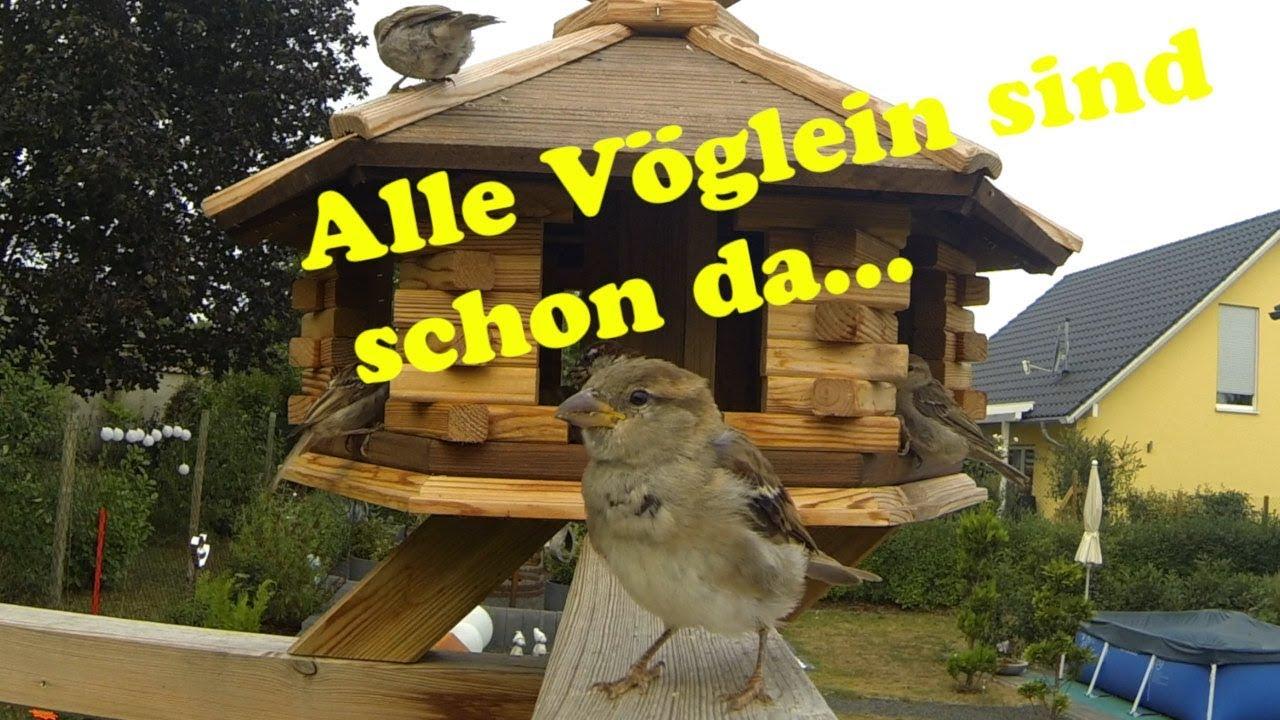 xxl vogelhaus  ansturm der vögel  youtube