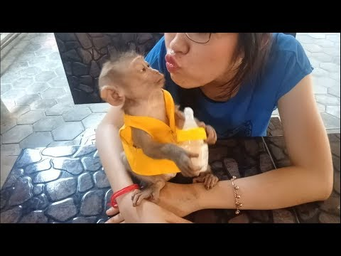 Baby Monkey Dodo Happy To Get Love From His Mother