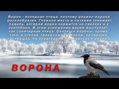 Презентация для детей зимующие птицы (картинки птиц с названиями)
