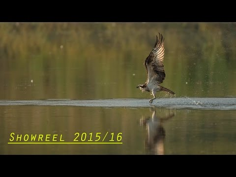 Meine besten Aufnahmen aus 2015/2016