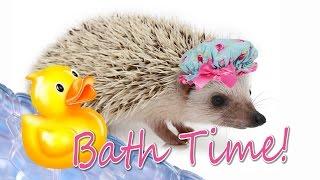 Video How to Give a Hedgehog a Bath download MP3, 3GP, MP4, WEBM, AVI, FLV Juni 2018