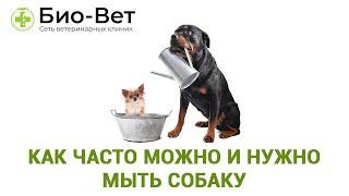 Как часто можно и нужно мыть собаку. Советы ветеринара