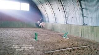 Вятская порода лошадей.