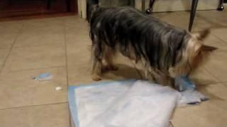 T. Bumpkins - Why Use A Washable Doggie Pee Pad