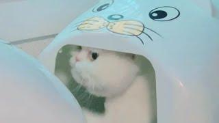 [까까캔디] 고양이화장실 ㅡ까까냥이의 사생활ㅡ