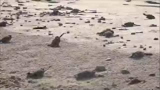 Câu chuyện Rùa con