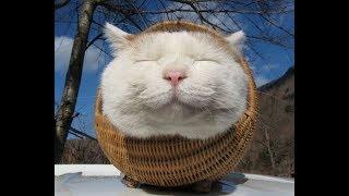 Лучшие приколы про животных | Подборка самых смешных видео про животных #7