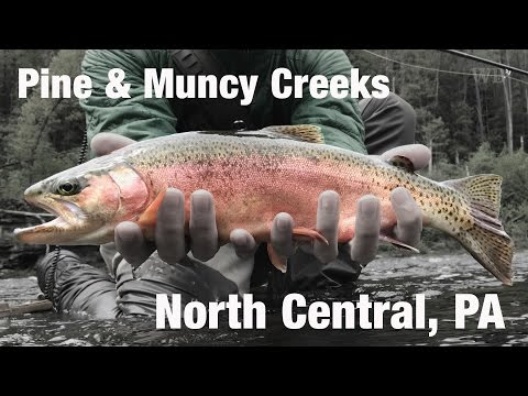 WB - Fly Fishing Pine Creek & Muncy Creek, PA - May