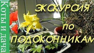 ЭКСКУРСИЯ ПО ПОДОКОННИКАМ  Мои комнатные цветы и растения Цветы на подоконнике 4