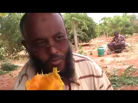 Somalia  puntland  Bilicda beeraha  Mudug