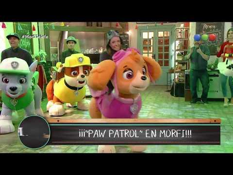 Descargar Video ¡Show de Paw Patrol en vivo! - Morfi
