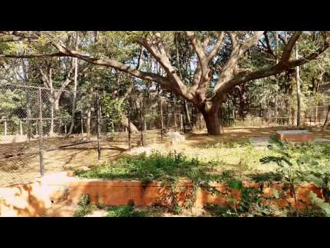 Funny deer at Mysore zoo, India #timelapse