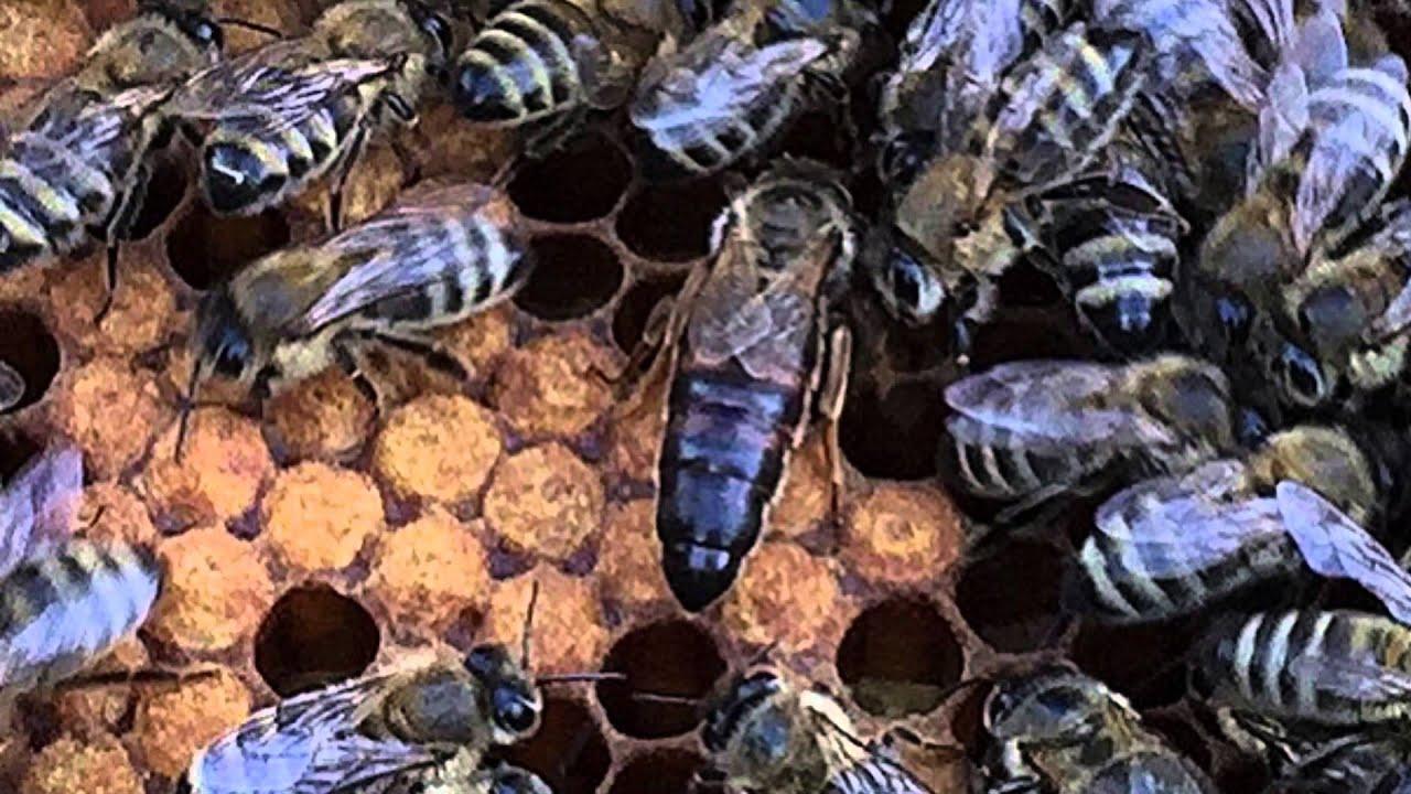 Ящик Картонный для пчелопакетов (ящик для перевозки пчел .