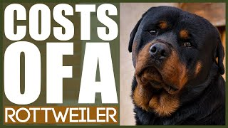 How Much Does A ROTTWEILER COST?