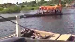 """Partie """"de pêche"""" sur le Rio Mamore"""