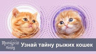 Бывают ли рыжие кошки однотонными?