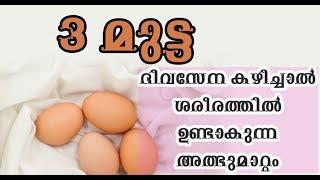 3 മുട്ട ദിവസേന കഴിച്ചാല് ശരീരത്തില് ഉണ്ടാകുന്ന അത്ഭുമാറ്റം /Malayalam Health Tips