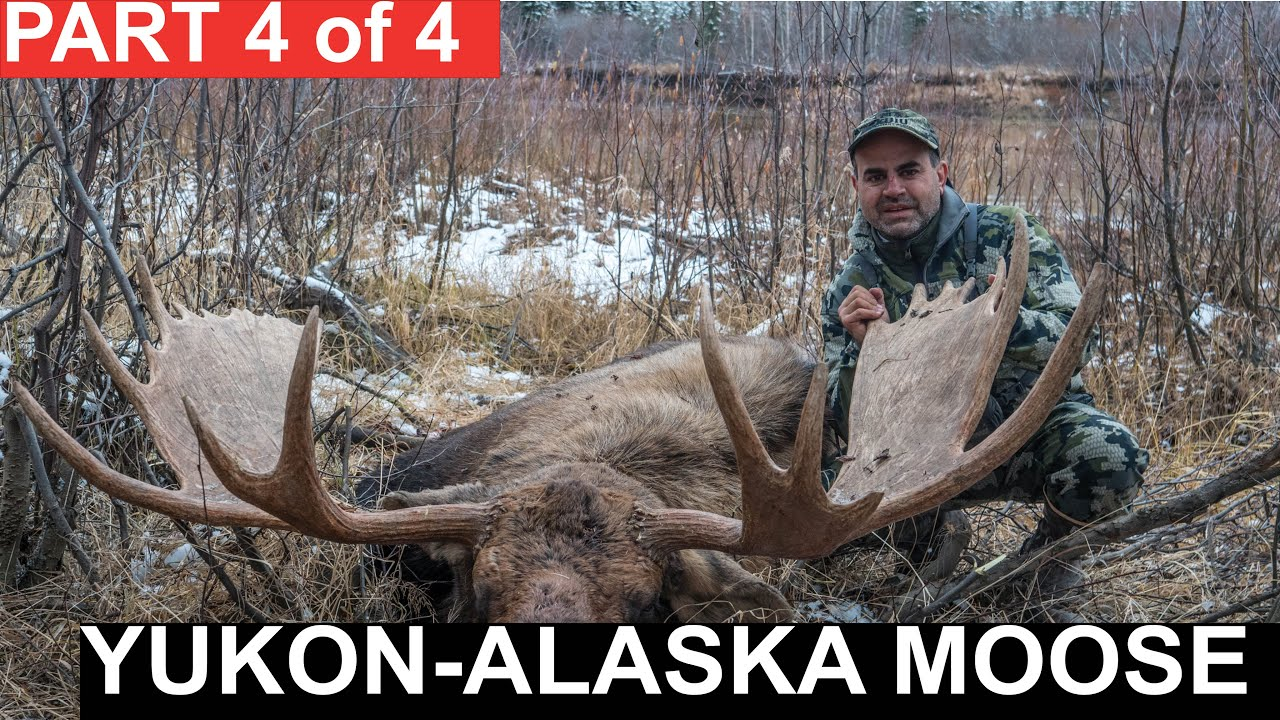 Download Yukon-Alaska Moose: Season 2, Episode 5, Part 4 of 4