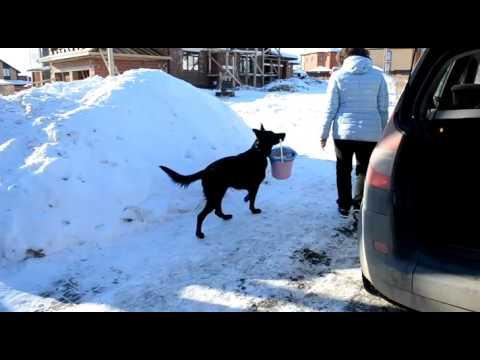 видео: Бомон Росс Евразия.  Как я мусор выносила.